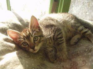kitty links